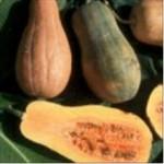 Huile de pépin de courge (Cucurbita pepo)