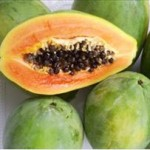 Papaye (Carica papaya)