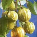 Garcinia and diet