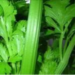Huile essentielle de céleri (apium graveolens)
