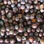 Huile essentielle de genièvre (Juniperus communis)