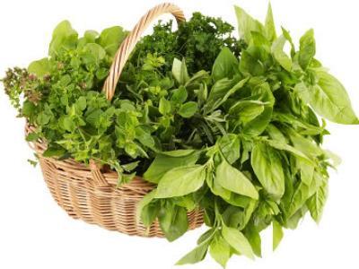 Cultiver ses plantes médicinales