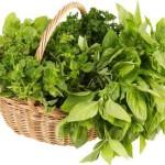 Comment cultiver ses plantes médicinales ?