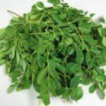 Moringa oleifera : une plante bienfaitrice
