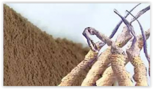 Cordyceps analyse chimique