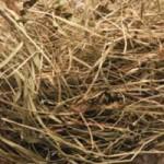Bain de foin : bien être en provenance des Alpages