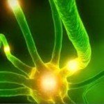 Spiruline : microalgue qui vous veut du Bien
