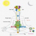 Ayurveda : conseils pour Vata, Pitta, Kapha