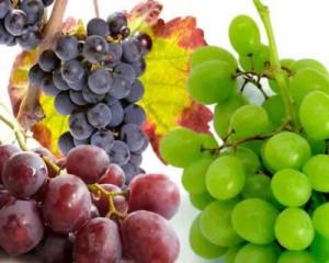 Cure de raisins