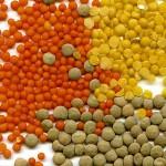 Aliments végétaux riches en protéines et faibles en gras