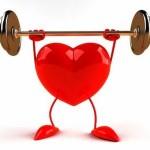 Cynorrhodon & santé cardiovasculaire