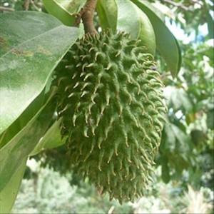 Corossol fruit du graviola