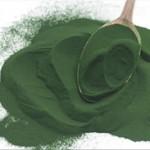 Chlorella associée à l'herbe d'orge