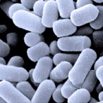 Probiotiques naturels : 12 aliments probiotiques et leurs effets thérapeutiques