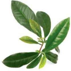 huile essentielle de Tea Tree dans le bain