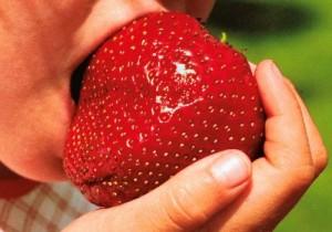 Une envie de fraise pour des bienfaits santé ?