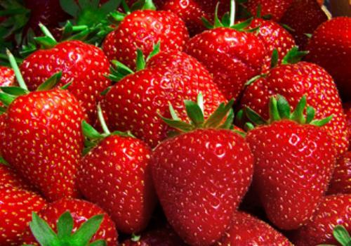 Étude scientifique et bienfaits des fraises