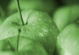Pomme Verte vertus & propriétés