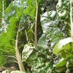 5 légumes contre la  mélancolie