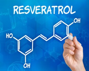 Resvératrol biodisponibilité