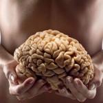 L'intestin : le second cerveau