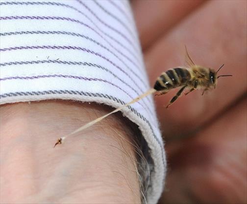 piq re d insecte rem des naturels bienfaits propri t s. Black Bedroom Furniture Sets. Home Design Ideas