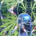 Cannabis & cerveau
