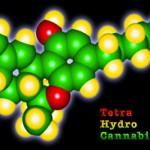 THC ou Tetra Hydro Cannabinol