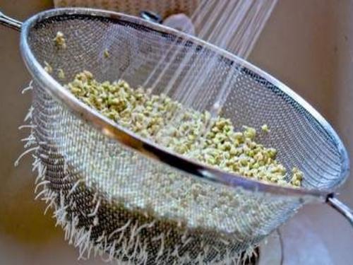 Bien rincer les graines germées