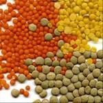 Lentilles achat, conservation et cuisson