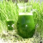 Jus d'herbe d'orge : concentré de vertus