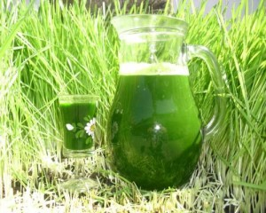 Herbe et jus d'herbe d'orge