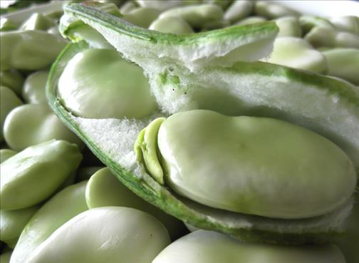 Bienfaits des fèves
