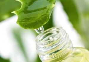 Préparer du gel d'Aloe vera
