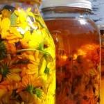 Macérât huileux, préparation & recettes