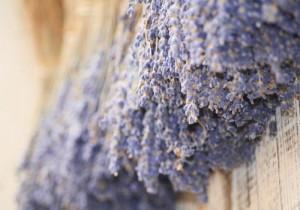 Cultiver la lavande en pot bienfaits propri t s for Lavande interieur