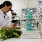 Cannabis thérapeutique : du nouveau ?