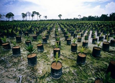 Huile de palme et déforestation
