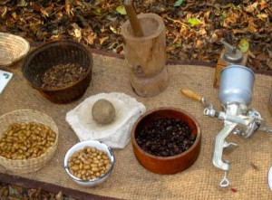 Préparer glands et café de glands de chêne