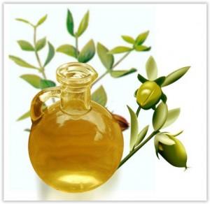 Bienfaits et propriétés de l'huile de Jojoba