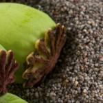 Les graines et leurs vertus