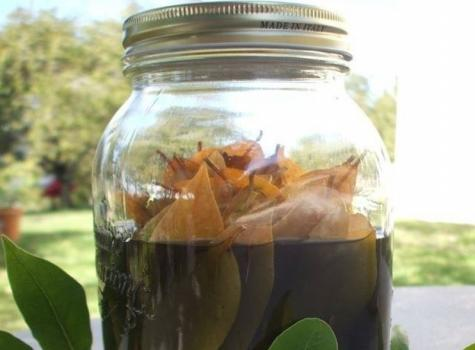 Tisane de feuilles de laurier