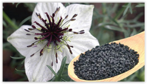 Cumin noir (Nigella Sativa)