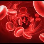Nettoyer & purifier le sang