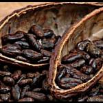 Cacao Criolo en poudre