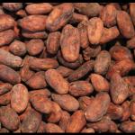 Fèves de cacao à croquer