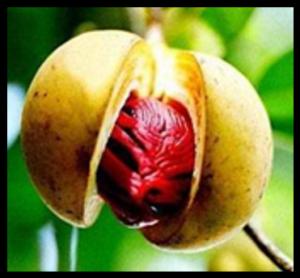 Noix de muscade fraîche de Guadeloupe