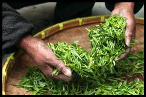 Thé vert sencha Japon