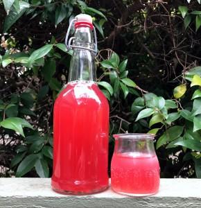 Limonade fermentée d'Hibiscus