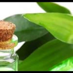 Huile essentielle de Thé vert